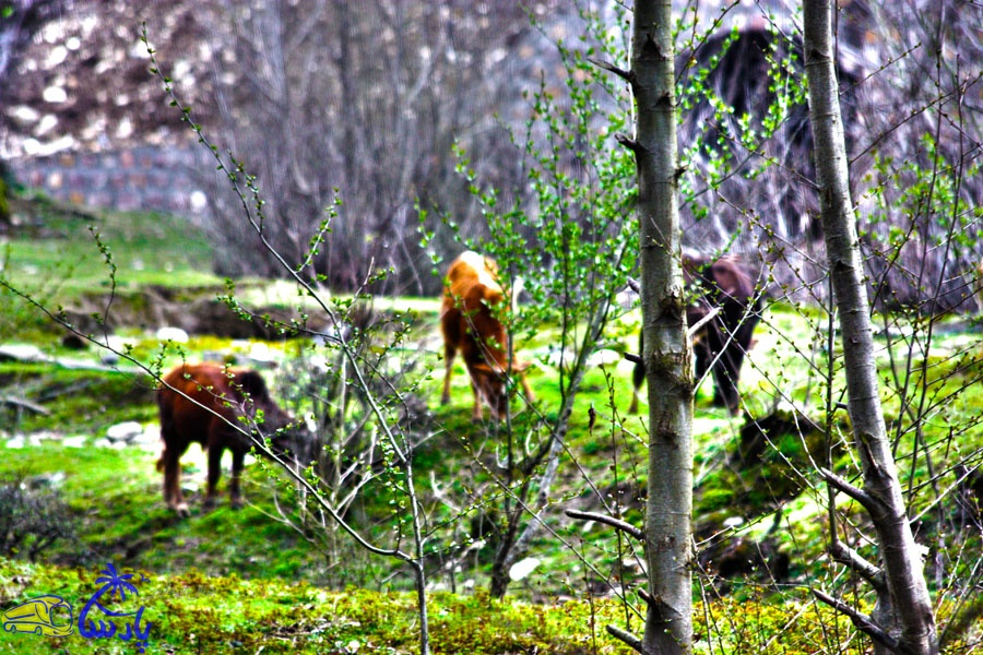 پارک جنگلي فين در قسمت جنوب شهر چالوس و در 6 کيلومتري محور اصلي جاده چالوس – کرج واقع شده است