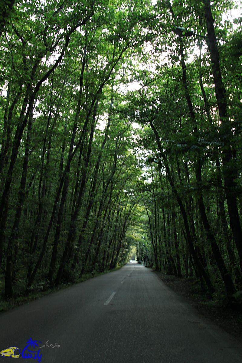 یکی از نقاط دیدنی استان گیلان و شهرستان تالش پارک جنگلی گیسوم ،سواحل زیبای دریای گیسوم و جاده جنگلی منتهی با آن است. مسیری بسیار زیبا و دیدنی که با درختان سر به فلک کشیده و تونل مانند حیرت هر بیننده ای را بر می انگیزد.