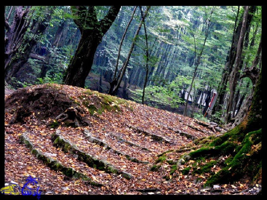 جنگل النگدره در 5 کیلومتری جنوب غربی شهرستان گرگان در مسیر جنگل ناهارخوران قرار دارد , این جنگل دارای وسعتی به مساحت 185 کیلومتر بوده و چشم اندازی بسیار زیبا و دلانگیزی دارد.