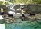 سیدنی - باغ وحش تارونگا