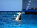 بروژ - پارک پستانداران دریایی