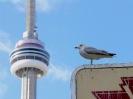تورنتو - برج ملی کانادا (CN Tower )
