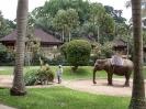 بالی - پارک فیل ها