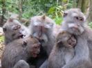 بالی - پارک جنگلی میمون ها