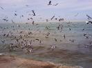 بوشهر - سواحل خلیج فارس_14
