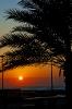 بوشهر - سواحل خلیج فارس_4