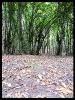 جنگل النگدره_5