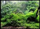 جنگل النگدره_7