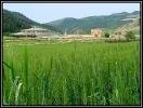 مدرسه و مسجد کریم ایشان_8