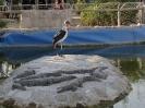 باغ پرندگان_10