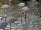 باغ پرندگان_11