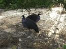 باغ پرندگان_21