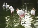 باغ پرندگان_23
