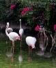 باغ پرندگان_27