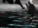 پارک دلفين ها_6