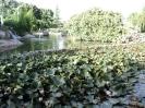باغ گلها_16