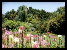 باغ گلها_29