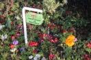 باغ گلها_7