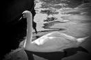 باغ پرندگان_13