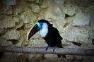 باغ پرندگان_20