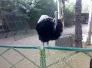 باغ پرندگان_2