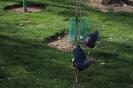 باغ پرندگان_33