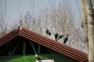باغ پرندگان_34