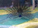باغ پرندگان_41