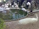 باغ پرندگان_43