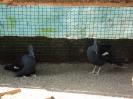 باغ پرندگان_44