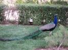 باغ پرندگان_45
