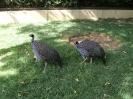 باغ پرندگان_46