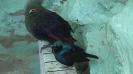 باغ پرندگان_49
