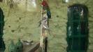 باغ پرندگان_50