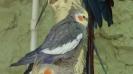 باغ پرندگان_51