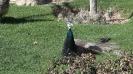 باغ پرندگان_59