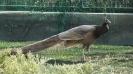 باغ پرندگان_60