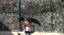 باغ پرندگان_73