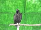 باغ پرندگان_85