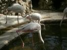 باغ پرندگان_88
