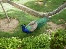 باغ پرندگان_89