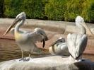 باغ پرندگان_93