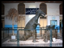 موزه تاریخ طبیعی_4