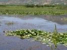 دریاچه زریوار_7