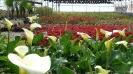 باغ گل محلات -