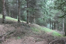 كلاردشت - جنگل اجابیت _1