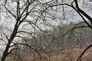 چالوس - پارک جنگلی فین -
