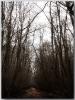 نور - پارک جنگلی نور -