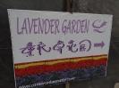 باغ لوندر -