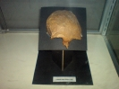فيليپين  - موزه ملي